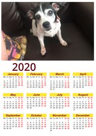 Photo year planner Glasgow pet
